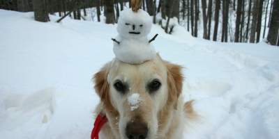 Dog with snowman