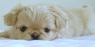 retired puppy